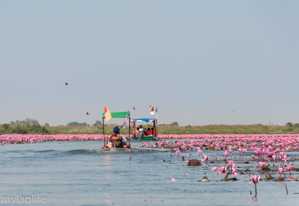 Red Lotus Lake Udon Thani Thailand Isaan Lake