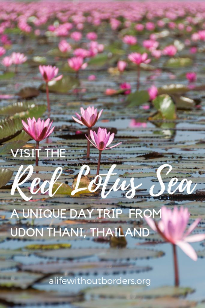 Everything you need to know about visiting the Red Lotus Sea