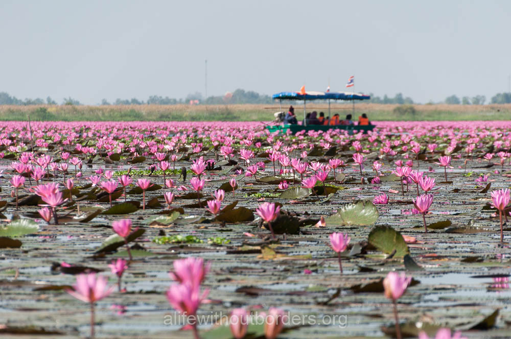 Everything You Need To Know About Visiting The Red Lotus Sea Udon